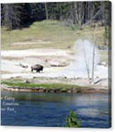 Live Dream Own Yellowstone Park Bison Text Canvas Print