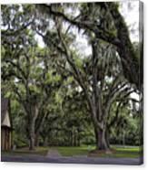 Live Oak And Spanis Moss Landscape Canvas Print