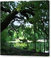 Live Oak Hidden Pond Canvas Print