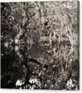 Live Oak Reflections Canvas Print