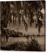 Live Oak Tree Spanigh Moss Sepia Silhouette Canvas Print