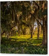 Live Oak Tree Canvas Print