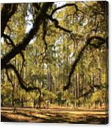Live Oaks Silhouette Canvas Print