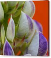 Lively Lupine Canvas Print