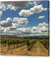 Livermore Vineyard Canvas Print