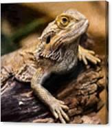 Lizard - Id 16217-202733-1873 Canvas Print