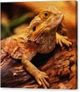 Lizard - Id 16217-202744-5164 Canvas Print