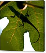 Lizard On A Fig Leaf Canvas Print