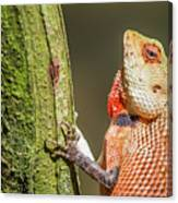 Lizard In Maldive Canvas Print