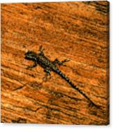 Lizard On Sandstone Canvas Print