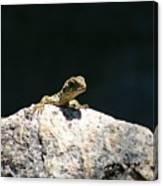 Lizard Rock Canvas Print