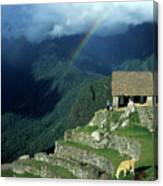 Llama And Rainbow At Machu Picchu Canvas Print