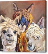 Llama Love Canvas Print