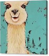 Llama Sid Canvas Print