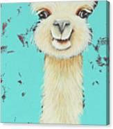 Llama Sue Canvas Print