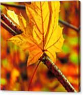 Leaving Autumn Canvas Print