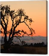 Loan Tree Overlooking Fog Canvas Print