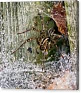 Lobo's Web Canvas Print
