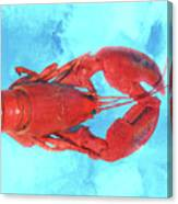 Lobster On Turquoise Canvas Print