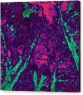 Locals 5 Canvas Print