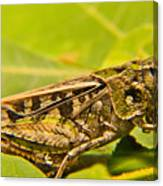 Locust In Green Canvas Print
