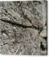 Log Rock Canvas Print
