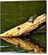 Log Turtle L 3584 Canvas Print