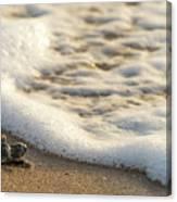 Loggerhead Turtle Hatchling 4 Delray Beach Florida Canvas Print
