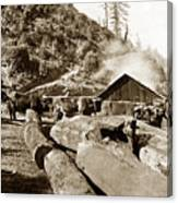 Logging With Oxen At A Saw Mill Sonoma County California Circa 1900 Canvas Print