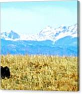 Lone Buffalo Watching The Rocky Mountains Canvas Print