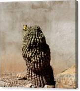 Lone Cactus In Sepia Tone Canvas Print