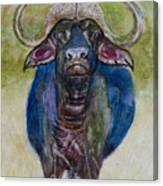 Lone Cape Buffalo Canvas Print