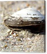Lone Clam Canvas Print