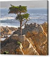 Lone Cypress - The Icon Of Pebble Beach California Canvas Print