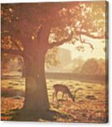 Lone Deer Canvas Print