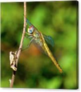 Lone Dragonfly Canvas Print