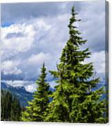 Lone Fir With Clouds Canvas Print