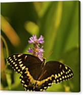 Lone Monarch Canvas Print