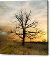 Lone Oak On The Marsh Canvas Print