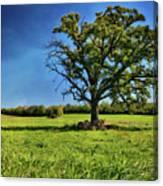 Lone Oak Tree In Wisconsin Field Canvas Print