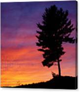Lone Pine Sunset Canvas Print