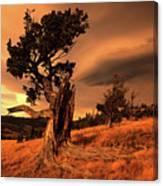 Lone Pine Whaleback Ridge Canvas Print