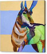 Lone Pronghorn Canvas Print