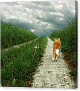 Lone Red And White Cat Walking Along Grassy Path Canvas Print