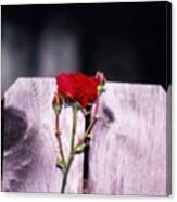 Lone Rose Canvas Print