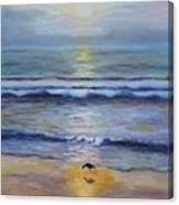 Lone Sandpiper Canvas Print
