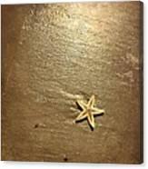 Lone Starfish On The Beach Canvas Print