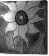 Lone Sunflower Iv Canvas Print