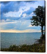 Lone Tree And Beach Flowers Canvas Print
