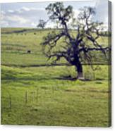 Lone Tree And Cows Canvas Print